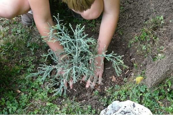 gardener-59727_1280-600