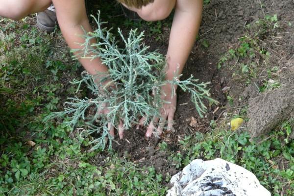 gardener-59727_1280