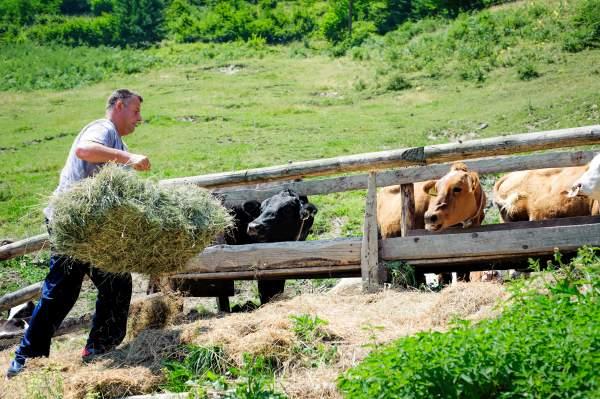 Ouvrier d'élevage des animaux