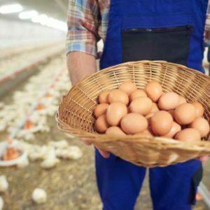 Un homme tiens un panier avec des œufs