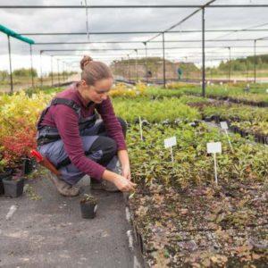 Une femme jardinière transplante et réorganise les plantes.