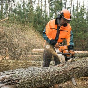 Bûcherons coupe un arbre
