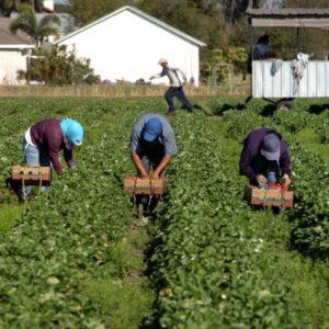 Les hommes pendant le travail sur l'exploatation agricole